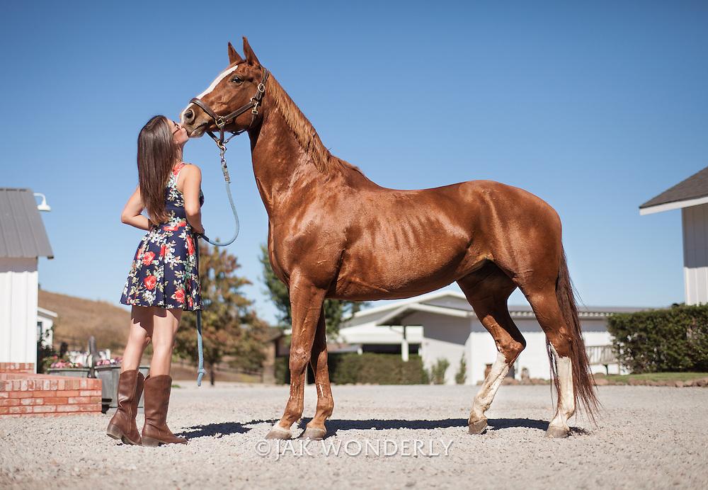 Hanoverian Horse Size