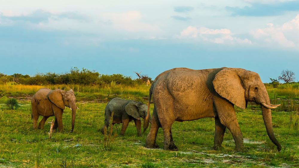 Elephants, Kwando Concession, Linyanti Marshes, Botswana.