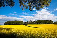 Europe, Germany, North Rhine-Westphalia, rape field near Heiligenhaus in the district Mettmann.<br /> <br /> Europa, Deutschland, Nordrhein-Westfalen, Rapsfeld bei Heiligenhaus im Kreis Mettmann.