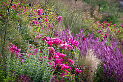 Border at Wynyard Hall with Rosa gallica var. officinalis AGM - Apothecary's rose, in the foreground with salvias, Perovskia and Stipa tenuissima