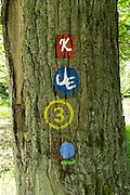 Wanderweg Markierungen auf Baumstamm, Naturschutzgebiet Kahle Haardt bei Scheid am Edersee, Nordhessen, Hessen, Deutschland | walking track signs on tree, nature reserve Kahle Haardt near Scheid on Lake Eder, Hesse, Germany