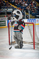 KELOWNA, CANADA - FEBRUARY 10: Kelowna Rockets' mascot Rocky Racoon stands in net during intermission against the Vancouver Giants on February 10, 2017 at Prospera Place in Kelowna, British Columbia, Canada.  (Photo by Marissa Baecker/Shoot the Breeze)  *** Local Caption ***