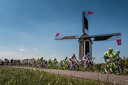 Peloton with riders of Tinkoff (RUS) on the Molendijk at Batenburg, stage 2 from Arnhem to Nijmegen running 190 km of the 99th Giro d'Italia (UCI WorldTour), The Netherlands, 7 May 2016. Photo by Pim Nijland / PelotonPhotos.com | All photos usage must carry mandatory copyright credit (Peloton Photos | Pim Nijland)