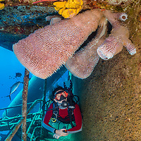 A diver (Marion Morin) swims down a corridor of the wreck of the USS Kittiwake, beneath some large azure vase sponges (Callyspongia plicifera), that have grown in the 6 years since the wreck was sunk. Seven Mile Beach, Grand Cayman, Cayman Islands, British West Indies. Caribbean Sea.