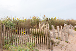 beach fence and grassy area on the beach in Montauk, NY