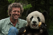 Pete Oxford & Giant panda (Ailuropoda melanoleuca) Family: Ailuropodidae.<br /> Wolong China Conservation and Research Center for the Giant Panda within Wolong Reserve. Sichuan Province.<br /> CHINA<br /> RANGE: Temperate bamboo forests of altitudes between 6,500 and 10,000 feet. Central Sichuan, South Gansu, East Qinling and in Shaanxi Provinces of China.<br /> ENDANGERED SPECIES<br /> Less than 1000 animals remain in the wild. Even the death penalty does not deter people from hunting these animals, but they are mostly endangered due to habitat loss.<br /> They consume about 45 pounds of a specific type of bamboo per day as well as some mosses, fungi and even small rodents. Males weigh: 85-125kg's and females weigh: 70-100 kg's. They live 10-15 years in the wild and up to 30 in captivity. Their natural predators are leopards.