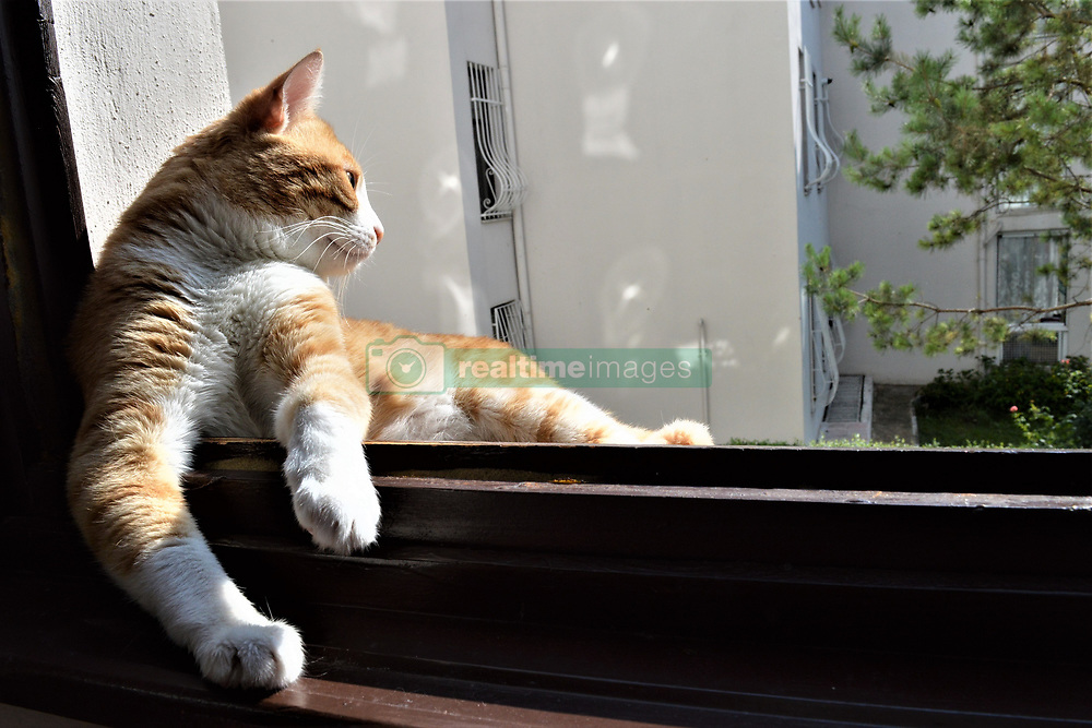 August 1, 2018 - Ankara, Turkey - A domestic cat enjoys a sunny day by sitting on a window sill in Ankara, Turkey on August 1, 2018. (Credit Image: © Altan Gocher/NurPhoto via ZUMA Press)