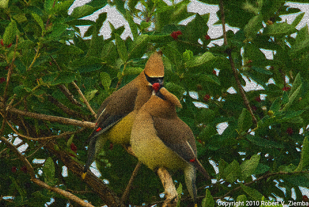 """Sharing a Honeysuckle Berry""-An image of two cedar wax-wings sharing a honeysuckle berry in a mosaic pattern finish."