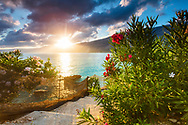 Green bush with pink flowers by the sea at sunrise