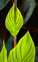 Exotic green foliage of a palm
