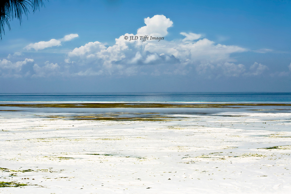 View across an expanse of white sandy beach toward the Indian Ocean.  A pileup of shapely white cloud towers over the scene.  A tree branch near the camera in an upper corner confirms the distance.  Tiny details of seaweed, pebbles, and so on, just visible in the sand.  The beach is deserted.