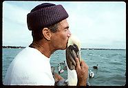 FLORIDA 10901: SEABIRD RESCUE