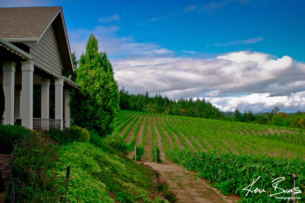 Looking over the rolling hills of a vinyard in Oregon wine country.