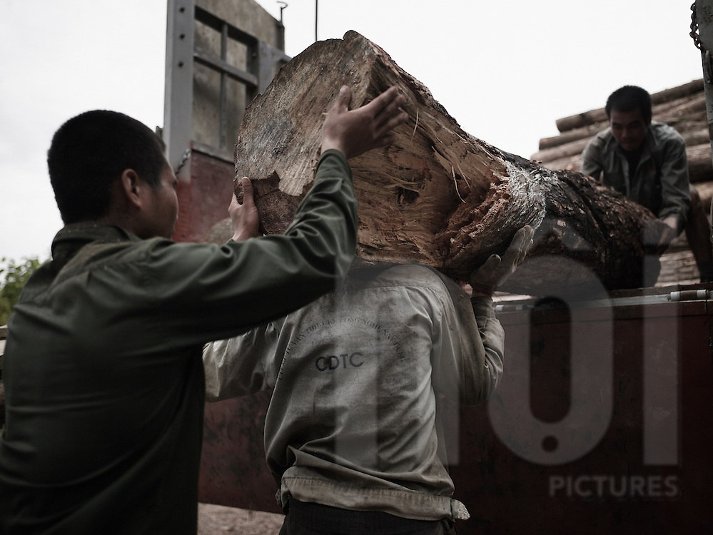 Vietnamese men carrying a trunk on their shoulders to load a trunk. Cao bang province, Vietnam, Asia.