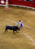 A banderrilero spikes a bull with flags as he prepares the bull for the bullfighter in the Plaza de Toros in Morelia, Mexico.