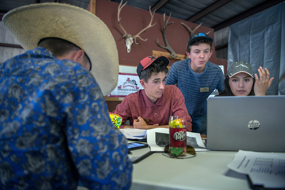 em061417c/jnorth/From left, Trey Mitchell, 15, from Santa Fe, Wyatt Mortenson, 16, from Santa Fe, Jesse Maxam, 16, from Corrales, and Cheyanne Carlisle, 17, from Tohatchi, work on a ranch management plan for the CS Ranch near Cimarron. These teenagers are taking a week long ranch management course put on by NMSU at the ranch, Wednesday June 14, 2017.  (Eddie Moore/Albuquerque Journal)
