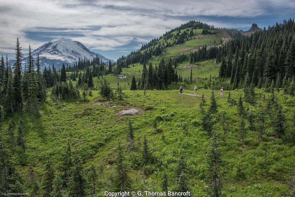 People walking through a subalpine meadow at base of Naches Peak.