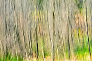 abtsraction of trees<br /> Nopiming Provincial Park<br /> Manitoba<br /> Canada