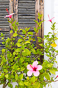 Asilah Medina street flowers, pots and plants Northern Morocco, 2015-08-11. <br />