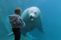 Woody the sealion with young boy, Alaska Sealife Center, Seward