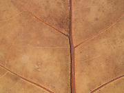 close up of a dried leaf which has a leather like look