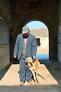 Man farmer with pet greyhound hound lurcher hunting dog in rural farming village of Poli near Penglai, Shandong Province, China