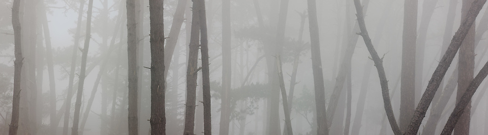 Fog, Skyline Forest, Monterey, California 2009