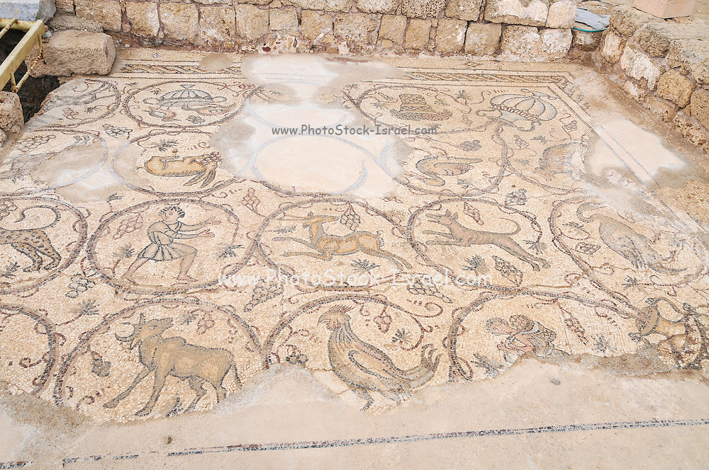 Byzantine mosaic depicting animals and hunting scenes. Israel, caesarea, a town built by Herod the Great about 25 - 13 BC,