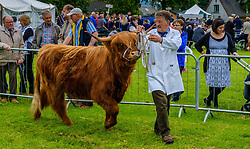 Biggar, South Lanarkshire, Scotland 23 July 2016<br /> <br /> Showing highland cattle in the show ring.<br /> <br /> (c) Andrew Wilson | Edinburgh Elite media