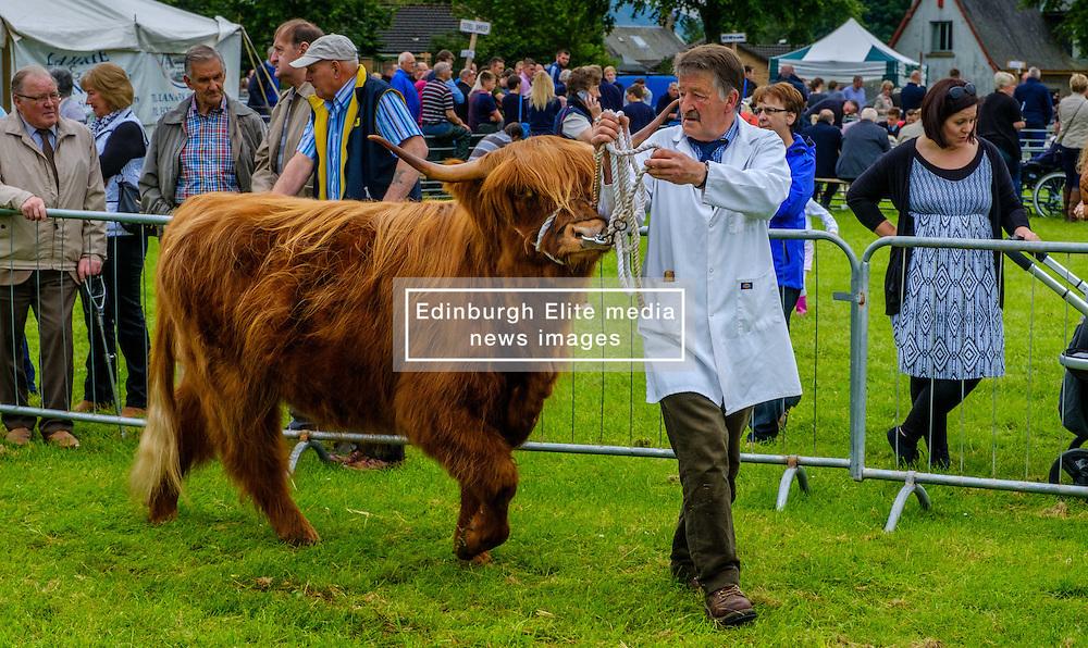 Biggar, South Lanarkshire, Scotland 23 July 2016<br /> <br /> Showing highland cattle in the show ring.<br /> <br /> (c) Andrew Wilson | Edinburgh Elite media