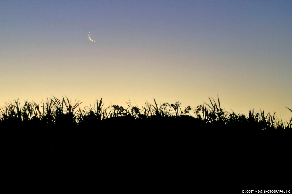 Silhouette of sugar cane field with sun and moonrise, Kuau, Maui, Hawaii