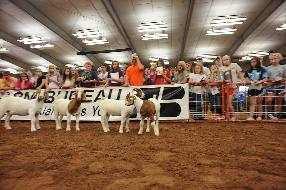 Big 3 Field Days.  Youth livestock judging contest at OSU