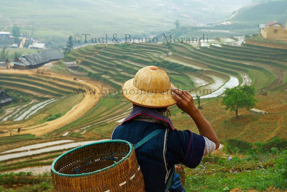 Vietnam, Province de Lao Cai, District de Sapa, Jeunes femme Hmong Noir travaillant dans les rizières // Vietnam, North Vietnam, Sapa area, Lao Cai, Village of Black Hmong, minority ethnic group, rice fields
