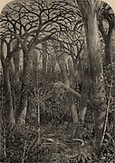 Artist's reconstruction of a forest during the Carboniferous period.  From 'Science for All' by Robert Brown (London, c1880).  Engraving