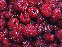 Raspberries background - cloae-up