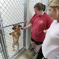 Maddie Hillhouse, an employee at the Tupelo-Lee Humane Society and Chris Maynard, volunteer coordinator with the Tupelo-Lee Humane Society, stop and visit with Tara, a one year old female, as she has her ear rubbed by Hillhouse as she stand upright inside her new kennel at the Tupelo-Lee Humane Society's new building on Monday afternoon. Employees and volunteers spent Sunday and Monday preparing and moving the animals to the new location. The grand opening and ribbon cutting will be Tuesday at 11AM.