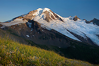 Mount Baker (elevation 10,778 feet (3,285 m) seen from the grassy slopes of Chowder Ridge, Mount Baker Wilderness Washington USA
