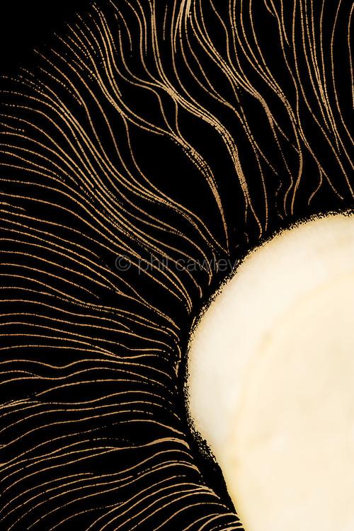 Abstract Mushroom