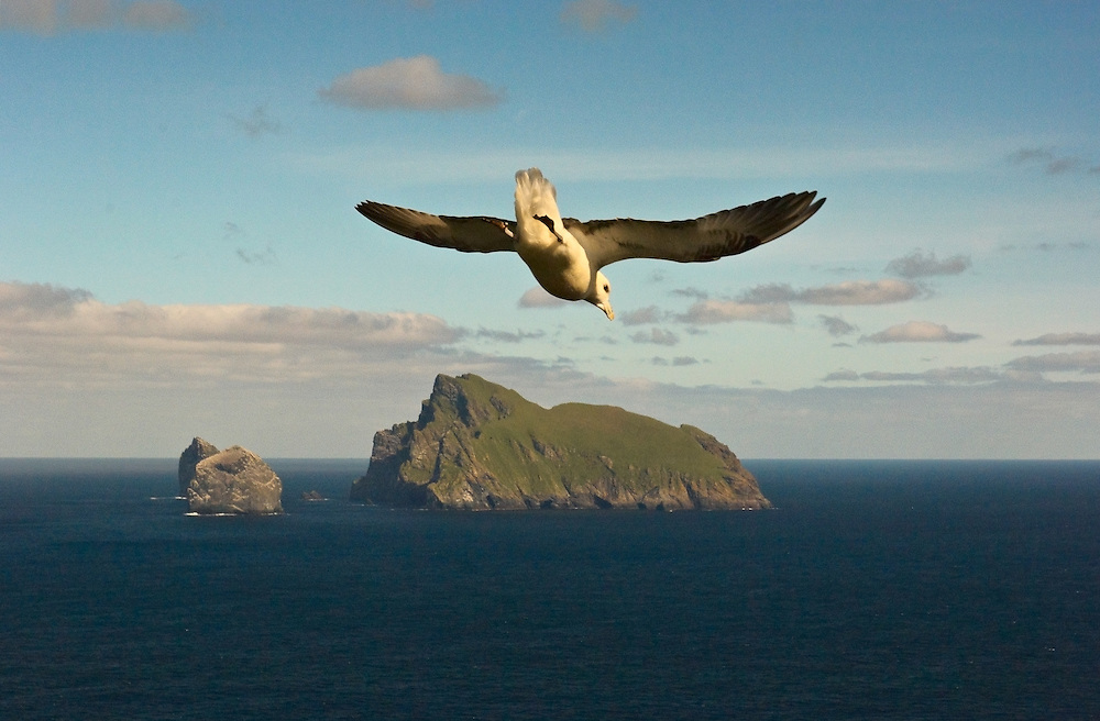 Fulmar (Fulmarus glacialis) flying over the edge of The Gap on St. Kilda; Stac Lee, <br /> Stac an Armin and Boreray in distance.