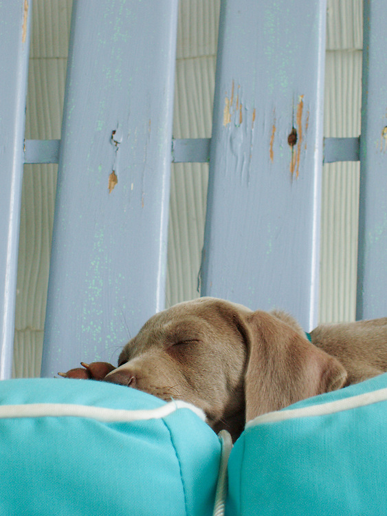 Puppy sleeping on pillows on a bench