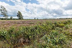 Blaricum, Noord Holland, Netherlands, Groeve Oostermeent
