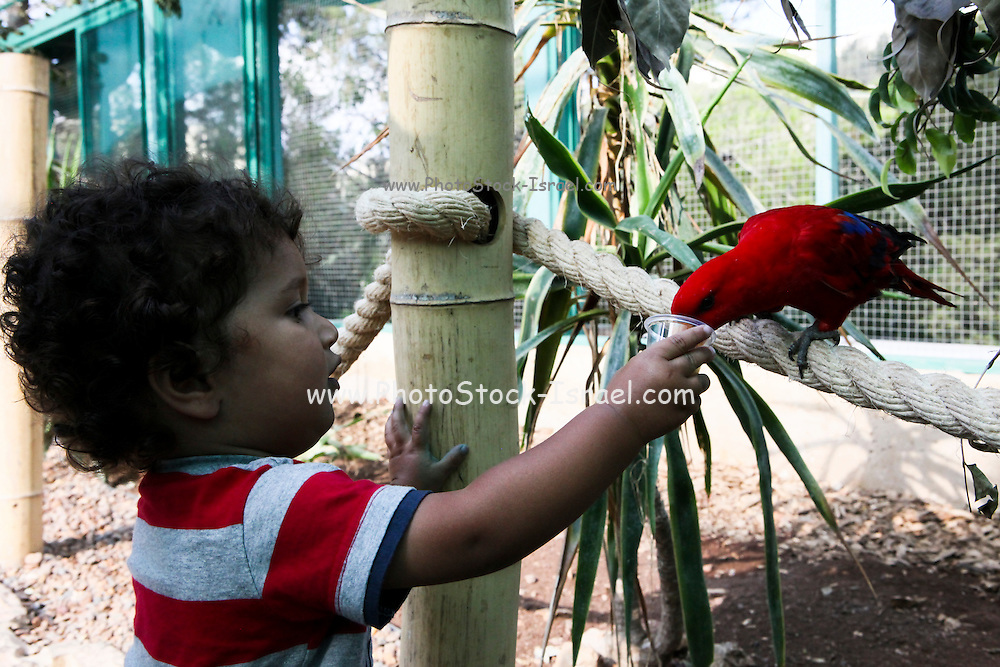 Child and Parrot