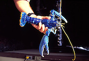 Blue Lobster, Kailua-Kona, Island of Hawaii<br />