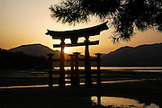 Sunset over the torii gate at Miyajima, with a pine tree casting its shadows in front of it.