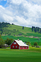 Red barn set amidst the rolling hills of green wheat fields, the Palouse region of the Inland Empire of Washington