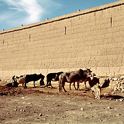 8 January 1963<br /> Kabul. Cattle troughs outside wall of Malik Khel.