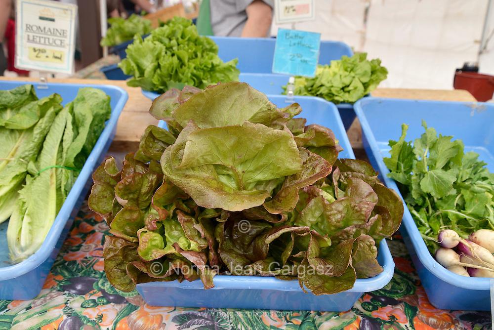 Lettuce, Farmers Market, Tucson, Arizona, USA.