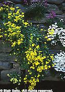 Floral on Wall, Morris Arboretum of University of Pennsylvania, Philadelphia, PA, gardens and arboretums
