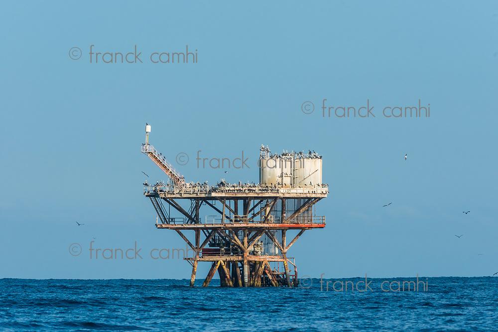 flock of birds in sea oil rig in the peruvian coast at Piura Peru
