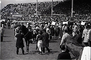 """26/06/1965<br /> 06/26/1965<br /> 26 June 1965<br /> Irish Sweeps Derby at the Curragh Race Course, Co. Kildare. Image shows the riders about to mount up. T.P. Burns prepares to get aboard no.1 """"Marbouk""""."""